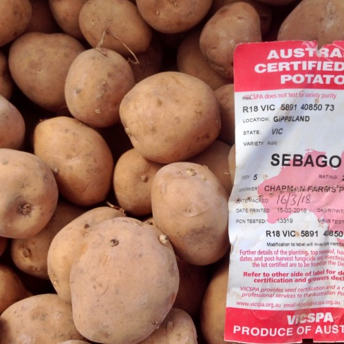 Certified Seed Potatoes